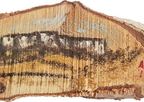 Pietra su betulla 1 - olio su legno 15x6,5 cm